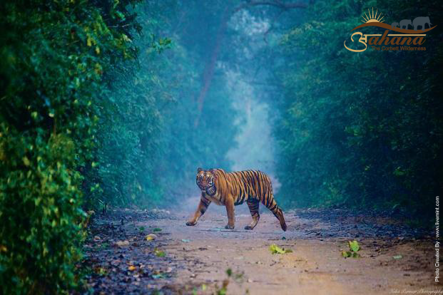 Wildlife experinces in Jim Corbett