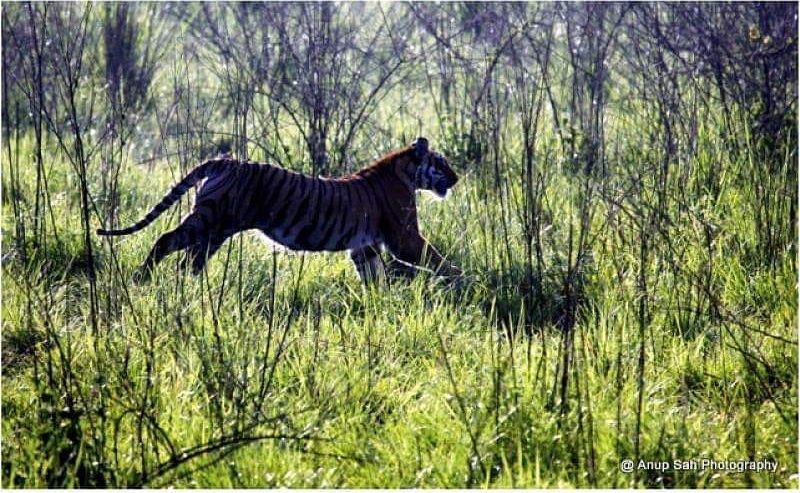 5 Reasons to Visit Jim Corbett National Park