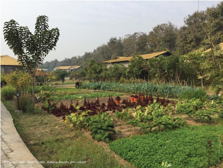 aahana resort organic garden in corbett