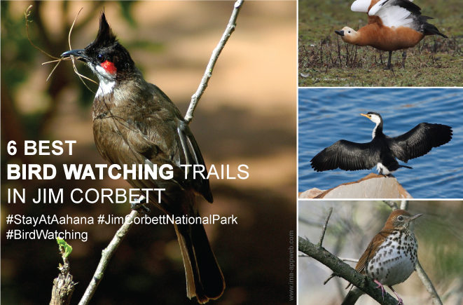 bird watching trails in jim corbett national park